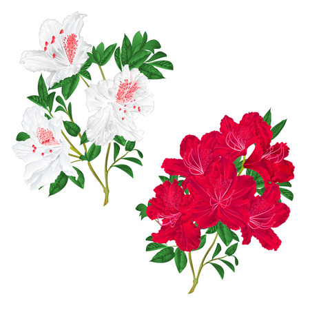 Branches of red and white flowers stock photography.