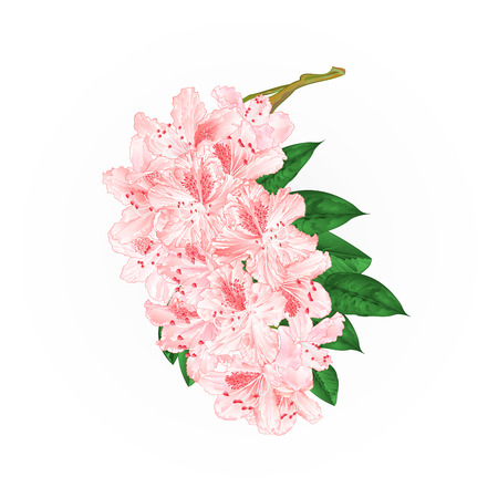 Branch light pink flowers stock photography illustration.