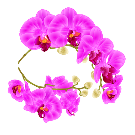 Branches of orchids on a white background Vector illustration. Illustration