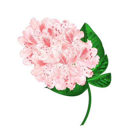 Light pink flowers stock photography Vector illustration.