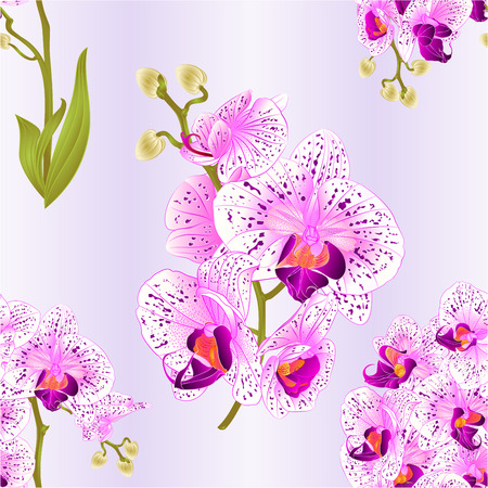 Seamless texture branches orchid Phalaenopsis purple and white flowers and leaves tropical plants stem and buds on a white background Illustration