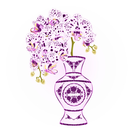 Orchid phalenopsis with dots  purple and white in a vase of porcelain   vintage vector illustration editable hand draw
