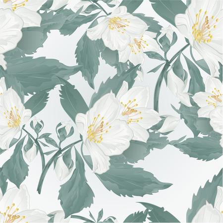 Seamless texture twig jasmine flower and buds spring flower  vintage vector illustration editable hand draw