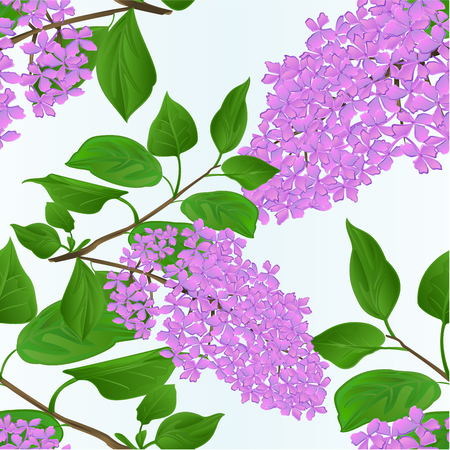 Seamless texture Lilac twig with flowers and leaves vintage natural background vector illustration hand draw  editable Illustration