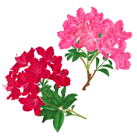 Branches  pink and red flowers rhododendrons  mountain shrub on a white background set seven vintage vector illustration editable hand draw Vectores