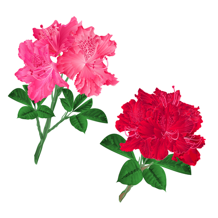 Branches  pink and red flowers rhododendrons  mountain shrub on a white background set seven vintage vector illustration editable hand draw Illusztráció