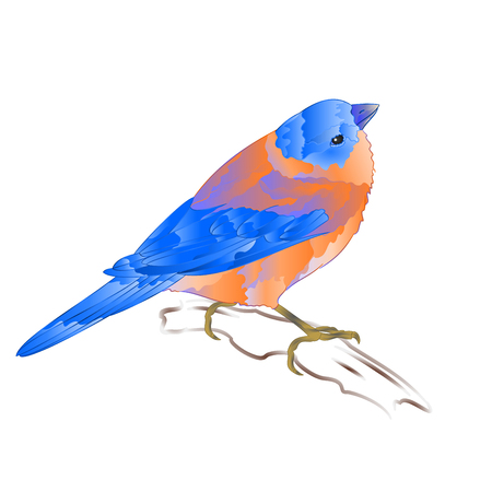 Bluebird small thrush songbirdon and background vintage vector illustration editable hand draw