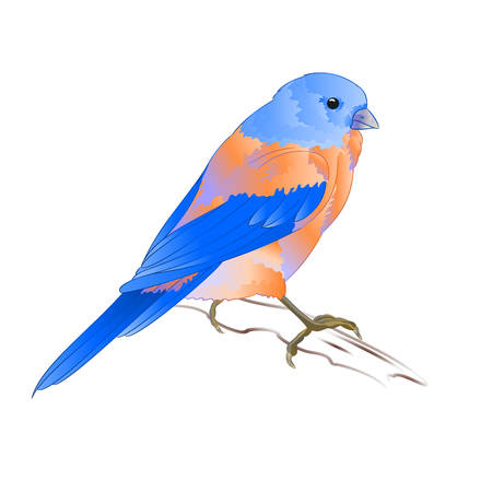 Small thrush Bluebird songbirdon on a white background vintage vector illustration editable hand draw