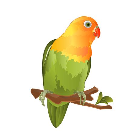 Papegaai Agapornis dwergpapegaaien tropische vogel staande op een tak op een witte achtergrond vector illustratie bewerkbare hand tekenen