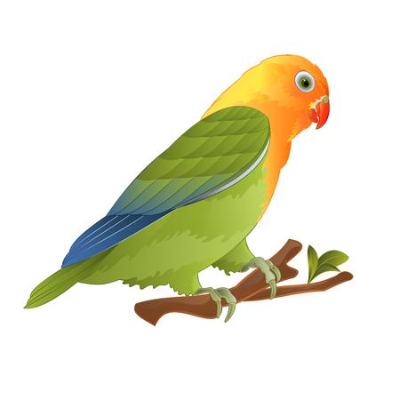 Papegaai dwergpapegaaien Agapornis tropische vogel staande op een tak op een witte achtergrond vector illustratie bewerkbare hand tekenen