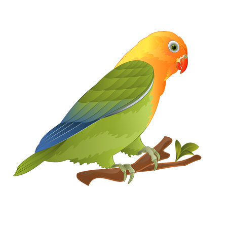 Parrot lovebird Agapornis tropical bird  standing on a branch on a white background vector illustration editable hand draw