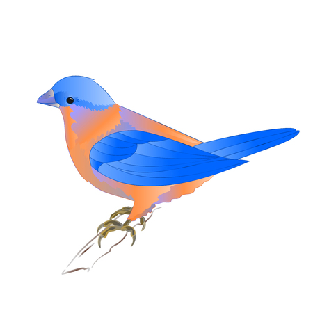 Small songbirdon Bluebird  thrush  on a white background vintage vector illustration editable hand draw Illustration