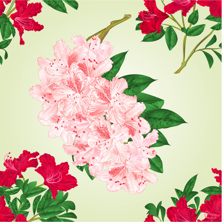 Seamless texture rhododendrons twigs with  red and light pink flowers and leaves  vintage  vector botanical illustration editable hand draw