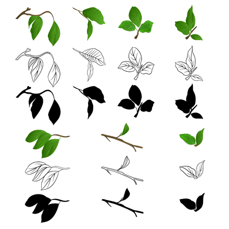 Twigs Lilac with leaves natural outline and silhouette on a white background vintage vector botanical illustration editable hand draw
