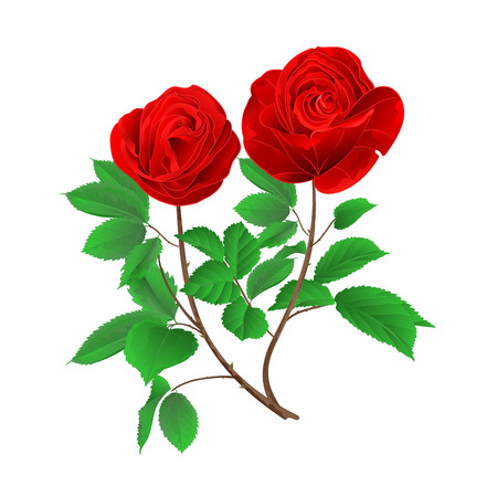 Stem buds red  roses with  leaves vintage  on a white background set three vector illustration editable hand draw