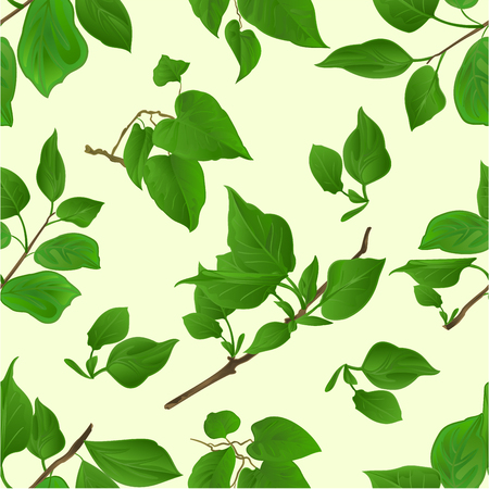 Seamless texture Twig Lilac with leaves nature background vintage vector botanical illustration editable hand draw