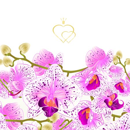 Purple and white orchid isolated on white background Illustration