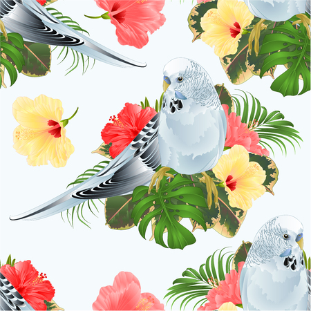 Seamless texture Budgerigar, blue pet parakeet and hibiscus on a tropical background vintage vector illustration editable hand draw