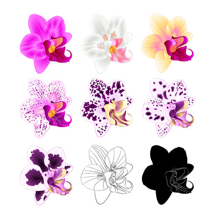 Orchid Phalaenopsis various colours natural, outline, silhouette,flower fifth on a white background vintage vector editable illustration hand draw 向量圖像