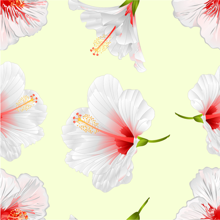 Seamless texture flowers tropical plant white hibiscus on a white background  vintage vector illustration editable hand draw 矢量图像