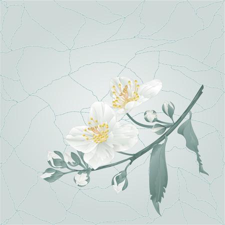 Flor de jazmín y capullos sobre un fondo azul grietas en el lugar de porcelana para dibujar texto vintage vector ilustración editable mano Ilustración de vector