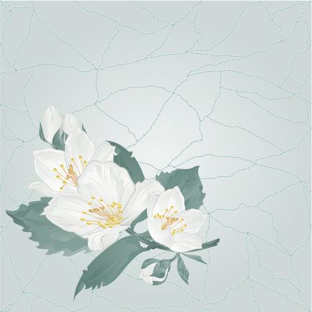Stem Jasmine flower and buds on a blue background cracks in the porcelain place for text vintage  vector illustration editable hand draw Illustration