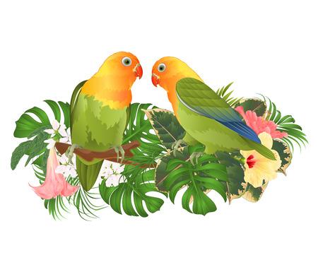 Papegaaien Agapornis dwergpapegaaien tropische vogels staande op een tak en Brugmansia met roze en gele hibiscus op een witte achtergrond vector illustratie bewerkbare hand tekenen Vector Illustratie