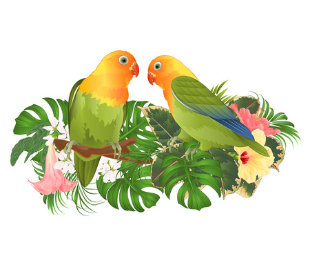 Parrots Agapornis lovebird tropical birds  standing on a branch and Brugmansia with pink and yellow hibiscus  on a white background vector illustration editable hand draw Ilustração