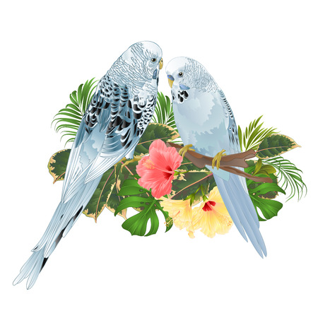 Birds Budgerigars, home pets ,blue pets parakeets  on a branch bouquet with tropical flowers hibiscus, palm,philodendron on a white background vintage vector illustration editable hand draw