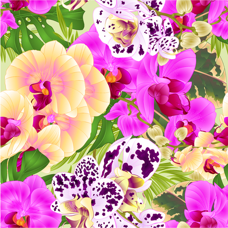 Seamless texture stem orchids  yellow lila spotted flowers  Phalaenopsis tropical plant    vintage vector botanical illustration for design hand draw