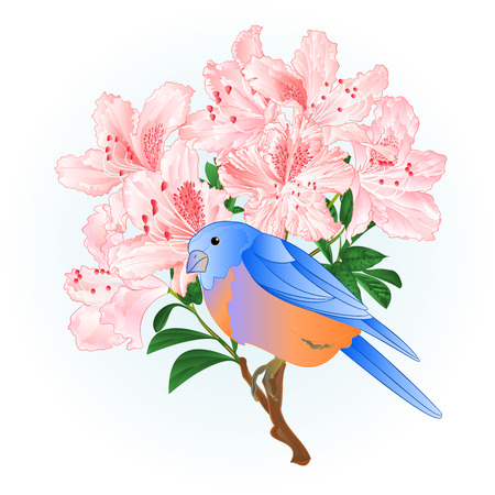 Small songbirdon Bluebird  thrush and light pink rhododendron spring background vintage vector illustration editable hand draw