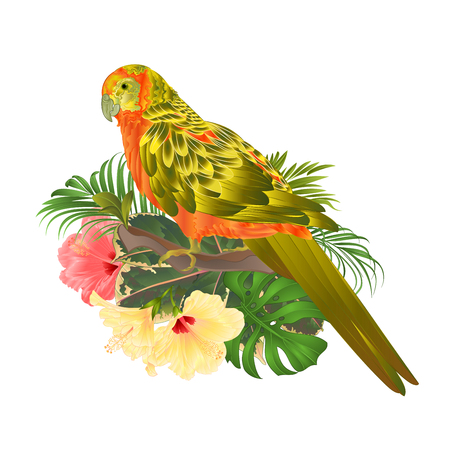 Bird Sun Conure Parrot , home pet , parakeet  on a branch bouquet with tropical flowers hibiscus, palm,philodendron on a white background vintage vector illustration editable hand draw