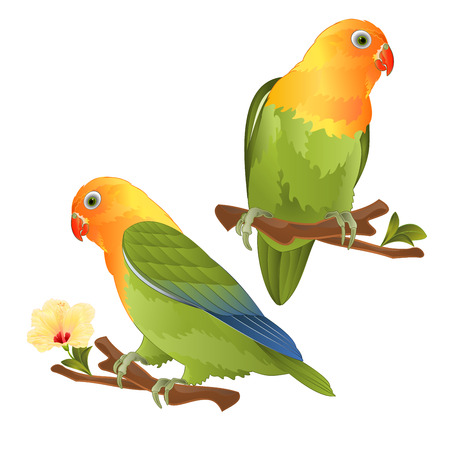 Parrots lovebird Agapornis tropical bird standing on a branch on a white background vector illustration editable hand draw Vector Illustratie