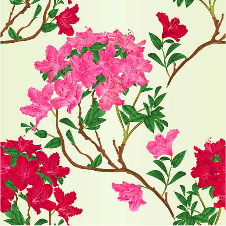 Seamless texture red and pink rhododendron branch mountain shrub vintage vector botanical illustration hand draw