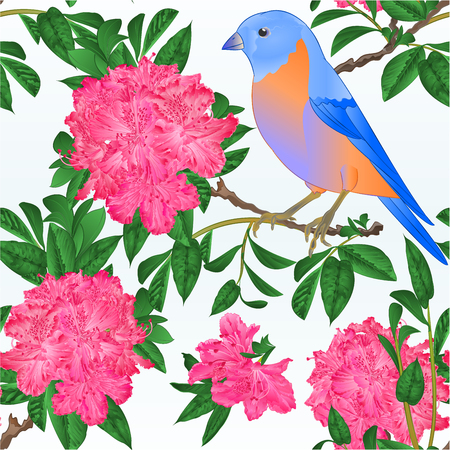 Seamless texture small bird Bluebird  thrush and pinkrhododendron spring background vintage vector illustration editable hand draw