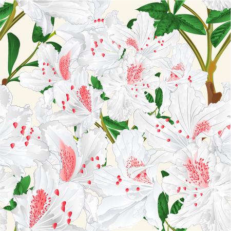 Seamless texture white rhododendron branch mountain shrub spring background vintage vector illustration editable hand draw Illusztráció