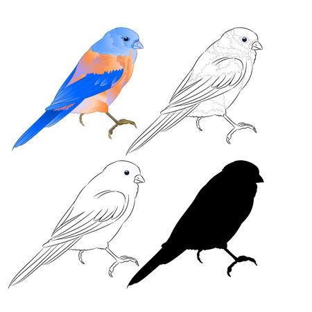 Thrush Bluebird small bird a  background vintage vector illustration editable hand draw Иллюстрация