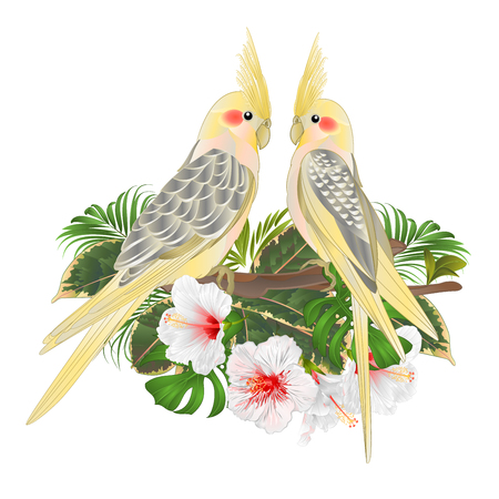 Funny  parrots yellow cockatiel cute tropical bird  and white hibiscus watercolor style on a green background vintage vector illustration editable hand draw