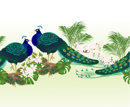 Border  seamless background peacock beauty exotic bird  and tropical flowers watercolor vintage vector illustration editable hand drawn