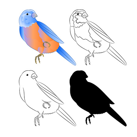 Small bird Thrush Bluebird nature outline and silhouette on a white background vintage vector illustration editable hand draw Vetores