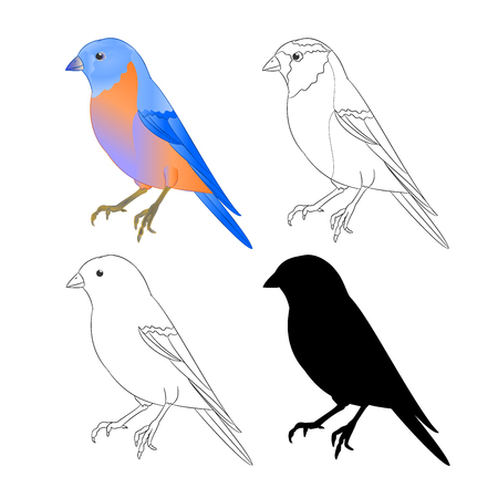 Bluebird  bird Thrush nature outline and silhouette on a white background vintage vector illustration editable hand draw