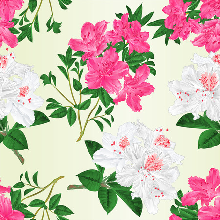 Seamless texture twigs pink and white rhododendrons with flowers and leaves vintage vector editable botanical illustration hand draw