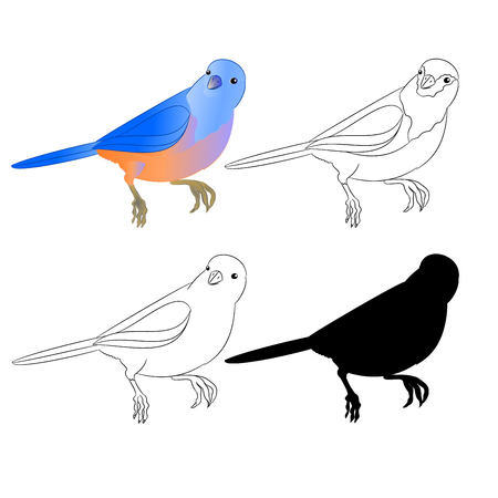 Small bird Thrush Bluebird outline nature and silhouette on a white background vintage vector illustration editable hand draw Illustration