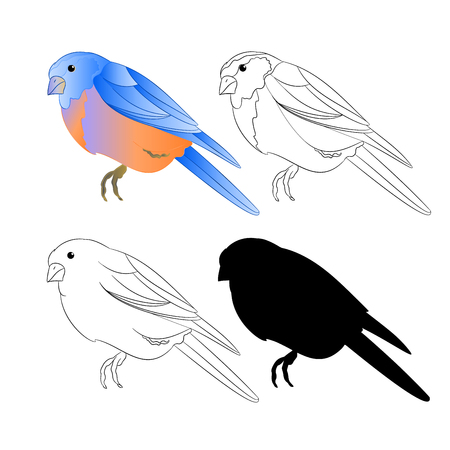 Bird Thrush Bluebird outline nature and silhouette on a white background vintage vector illustration editable hand draw