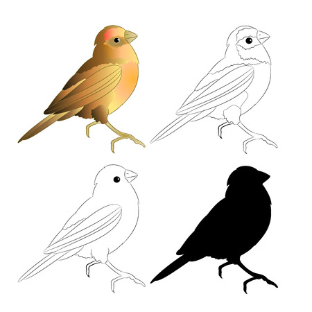 Small bird Thrush  silhouette and outline nature  on a white background vintage vector illustration editable hand draw