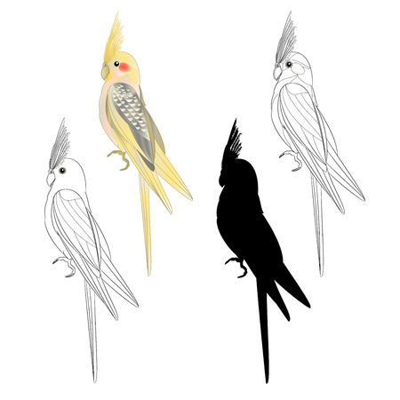 Yellow cockatiel cute tropical bird funny  parrot watercolor style silhouette of the outline on a white background vintage vector illustration editable hand draw