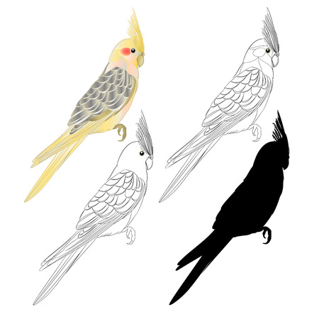 Yellow cockatiel cute tropical bird funny parrot watercolor style outline and silhouette on a white background vintage vector illustration editable hand draw Vettoriali