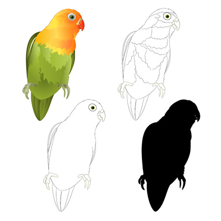 Parrot Agapornis lovebird tropical bird  natural and outline and silhouette on a white background vector illustration editable hand draw