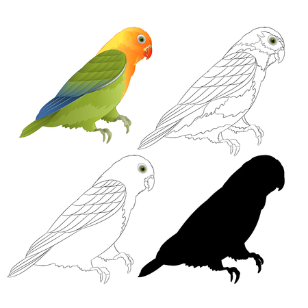 Agapornis lovebird parrot tropical bird  natural and outline and silhouette on a white background vector illustration editable hand draw