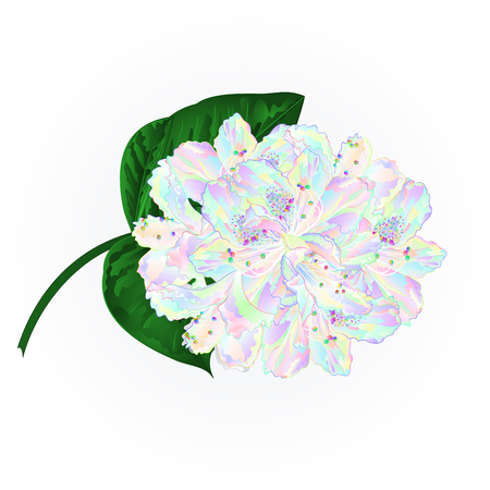 Colorful Rhododendron branch  flowers  mountain shrub on a white background vintage vector illustration editable hand draw